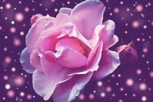 Egészség Gyógyító rózsák Minden Nap Alap