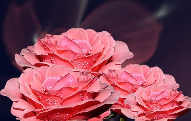 salmon-pink-952093_640
