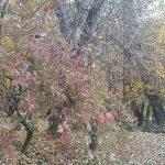 őszi-park-lombhullatás-http://minden-nap-alap.hu