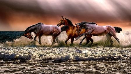 Mit jelent álmaink  lova vagy liftje ?