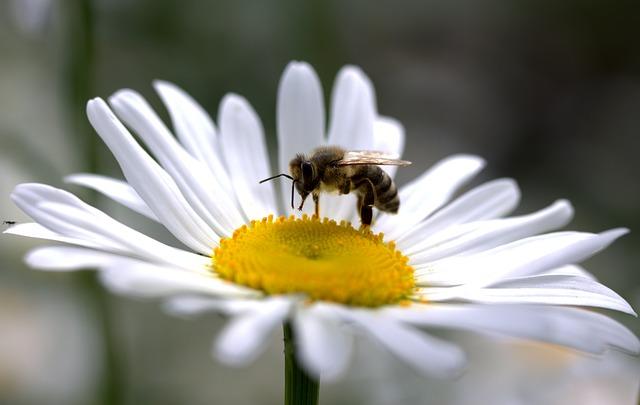 Álombeli méh, mell, mén, menny Az álmok üzenete 82. Minden Nap Alap