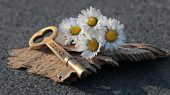 Álom virág Az álmok üzenete 136. Minden Nap Alap